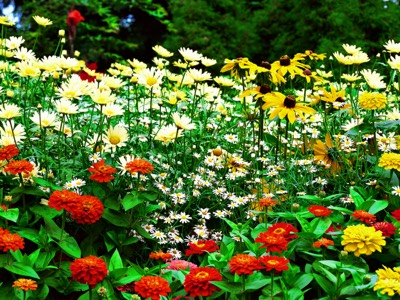 Flower Garden Wallpaper (1)
