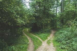 woods-768753_1280